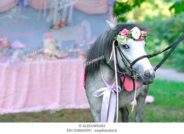 in the summer the park is a gray pony with blue eyes and a wreath of flowers on her head