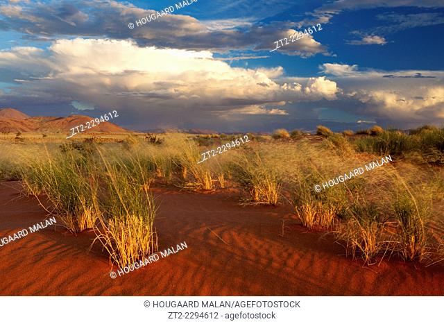 Landscape view of afternoon sunlight below stormy skies in a desert landscape. Namib Rand, Namibia