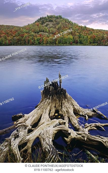 Stump, Mt-Orford-National-Park, Québec, Canada