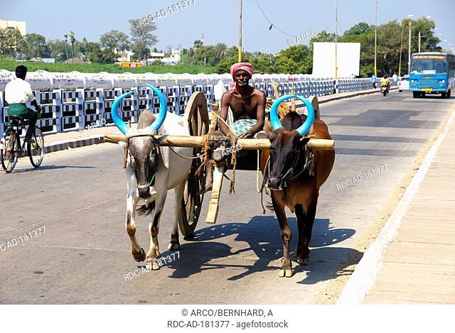 Man with oxwagon, Madurai, Tamil Nadu, India, Zebu Cattle
