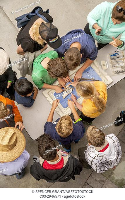 Interested children watch as a sand shark is dissected at a harbor community festival in Newport Beach, CA