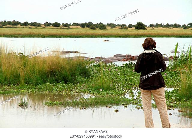 A female tourist stands on the shores of the nile river in Murchison Falls National Park, Uganda and watches a group of hippopotamuses in the water