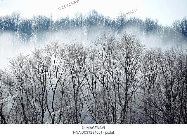 Hokkaido in winter