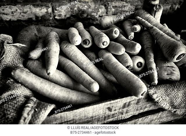 Organic carrots. London, England