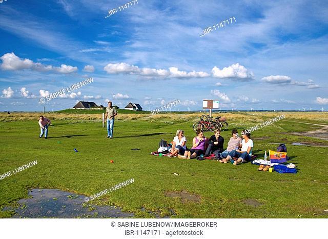 Hamburger Hallig island, North Friesland, Schleswig-Holstein, Germany