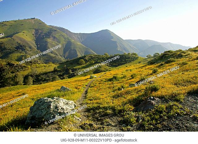 Central California. Figueroa Mountain In Los Padres National Forest