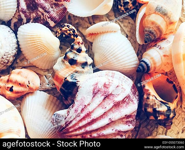 Seashells as summer coastal background, nature and travel concept