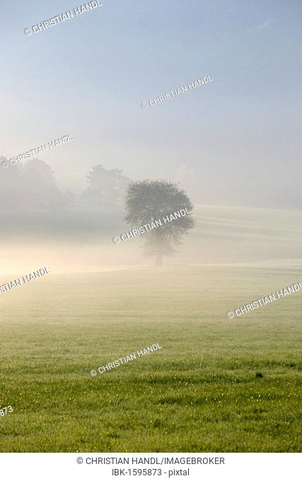 Morning fog atmosphere in Kleinfeld, Berndorf, Triestingtal valley, Lower Austria, Austria, Europe
