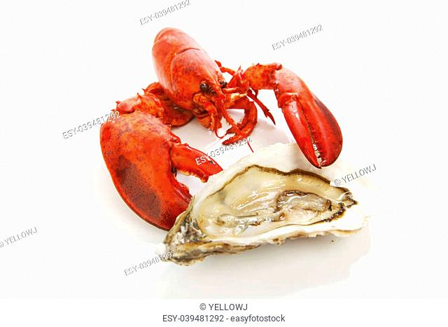 Lobster and oyster isolated on white background