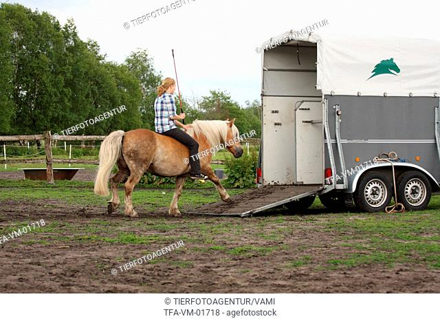 woman with Haflinger horse