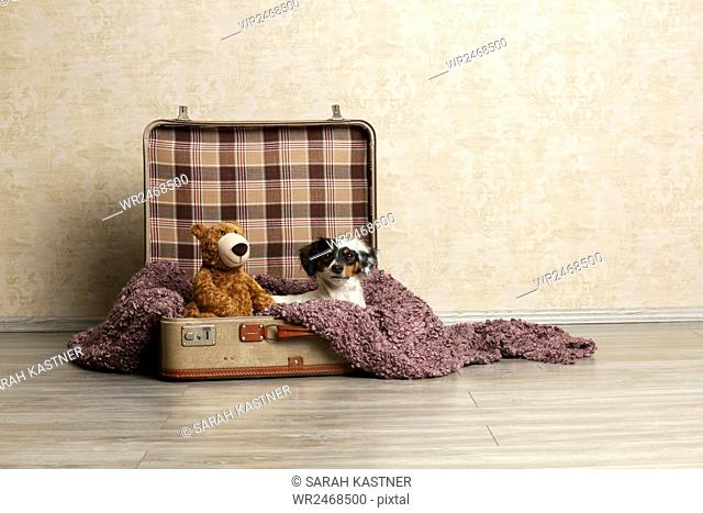 Little dog sitting in a luggage case