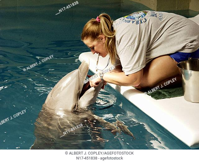 Florida Everglades, bottle nosed dolphin
