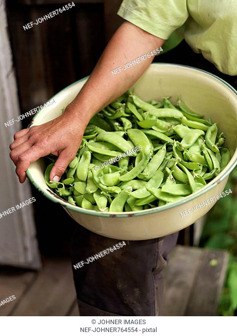 A bowl of pea pods, Sweden
