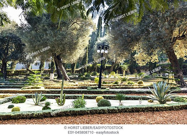 Cacti and olive trees in the Bahai Gardens at Mount Carmel in Haifa, Israel, Middle East