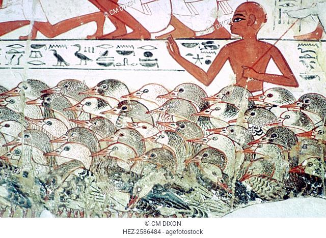 Counting the geese: fragment of wall painting from the tomb of Nebamun, (no 2), Thebes, Egypt, 18th Dynasty, c1350 BC. Showing a man herding geese with text...