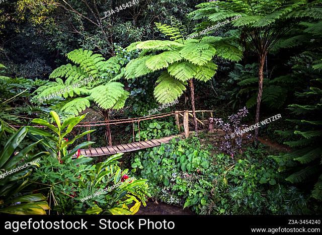 Jungle with bridge in Topes de Collantes, Trinidad, Republic of Cuba, Caribbean, Central America