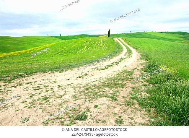 Landscape of Val d'Orcia province. Tuscany, Italy
