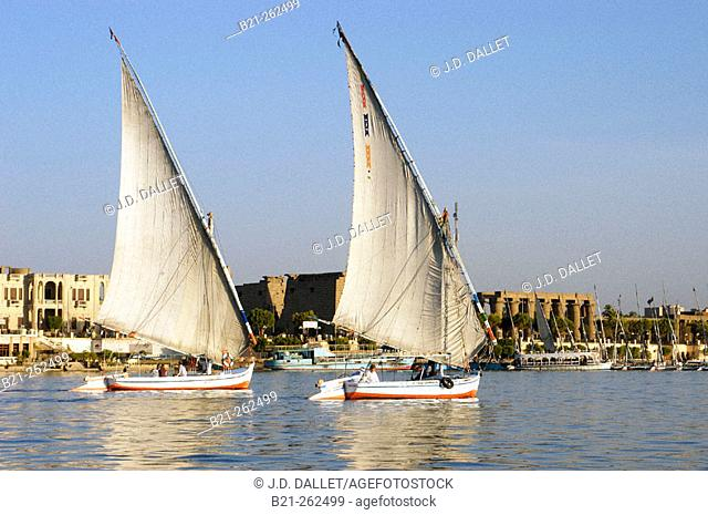 Feluccas on Nile River and Luxor temple in background. Egypt