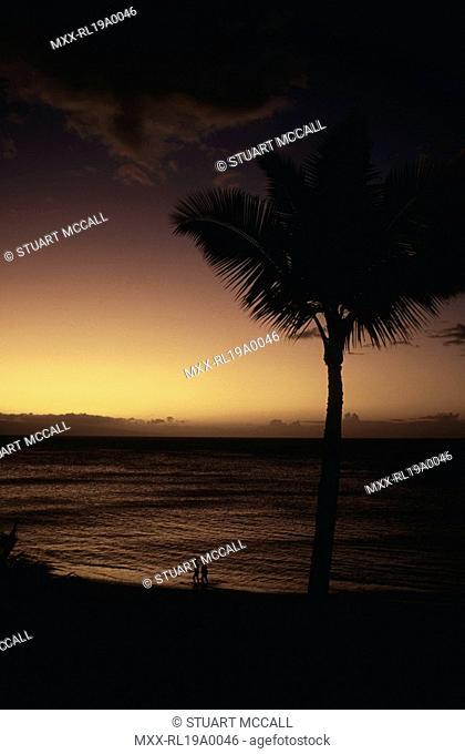 Silouette of palm tree at sunset, kahana, Maui, Hawaii