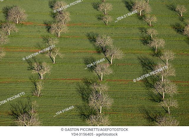 Aerial view of the field, Mallorca lands, Balearic Island, Spain