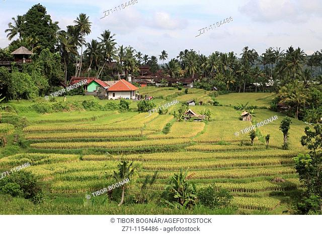 Indonesia, Bali, terraced rice fields, farmhouses
