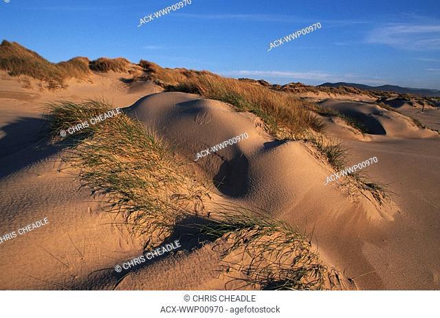 USA, Oregon Dunes National Recreation Area