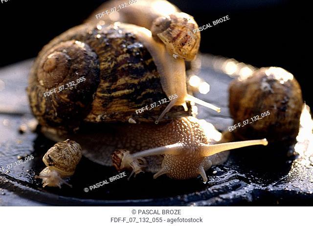 Close-up of a snail crawling