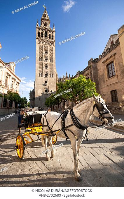 Horse carriage in front of Giralda Tower. Seville, Andalusia, Spain