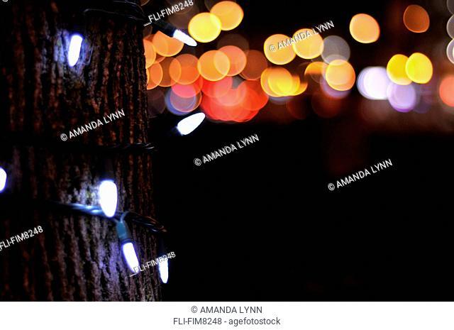 Close up of lights around a tree, Toronto, Ontario