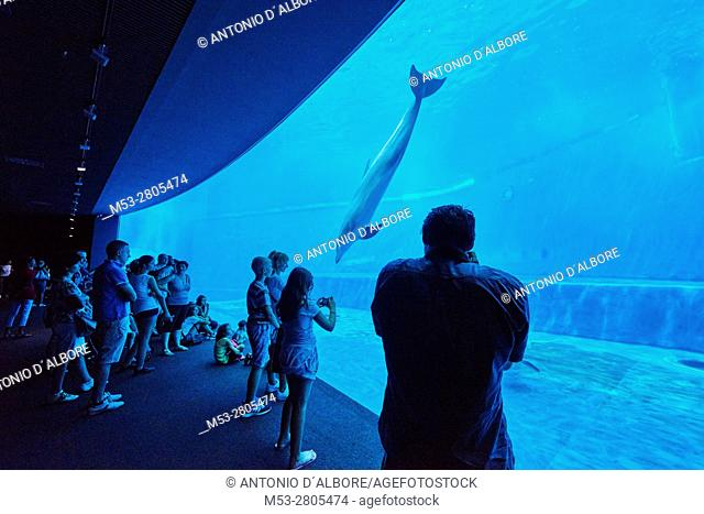 People visiting the dolphins tank at the Aquarium of Genoa. Italy