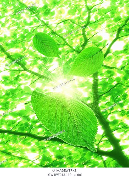 Sunlight through branches of leaves digital composite