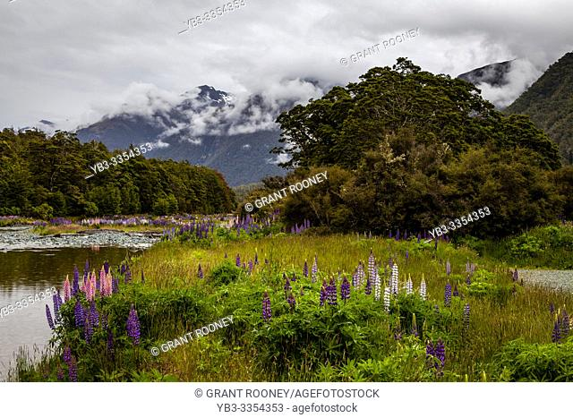 Colourful Floral Landscape Along The Milford Road, South Island, New Zealand