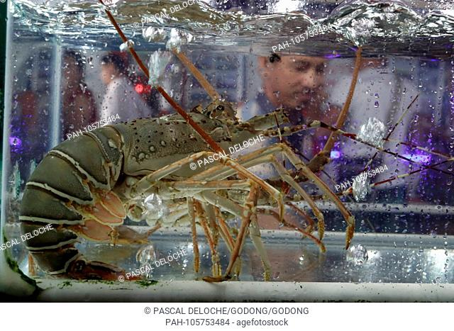 Seafood restaurant in Duong Dong town. Lobster. Phu Quoc. Vietnam.   usage worldwide. - Duong Dong/Phu Quoc/Vietnam