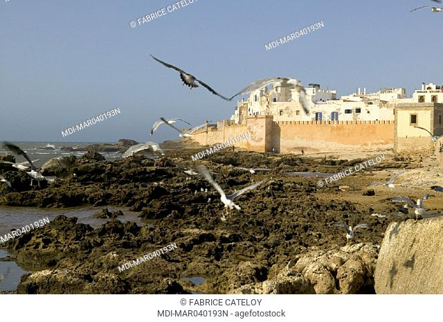 Rampart of the old town with seagulls on rocks in the foreground