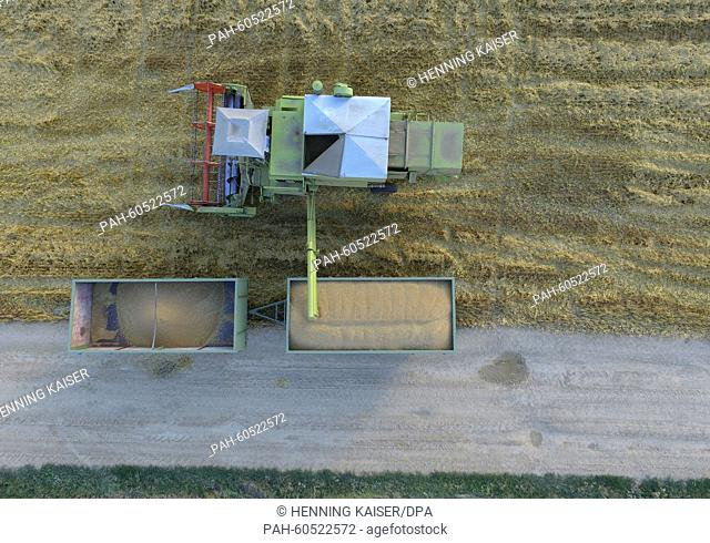 A farmer drives across a field in his combined harvester as he harvests a cornfield inKerpen, Germany, 3 August 2015. Photo: Henning Kaiser/dpa | usage...