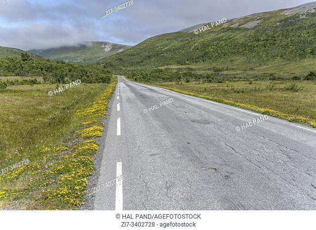 landscape with blossoming roadside of road in green countryside near Artic village on western side of island, shot under bright summer light near Stave, Andoya