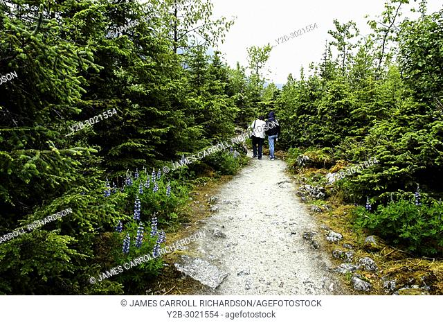 Couple walking along lupine-lined trail in Alaska's Mendenhall Glacier Park