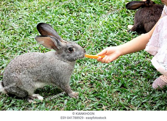 Children's Hand Feeding a Rabbit with Carrot in the Outdoor Farm