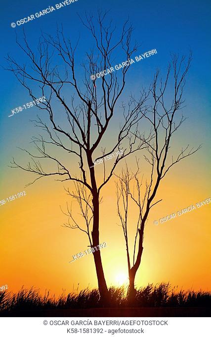 Tree fall into the landscape of the Natural Park Ebro Delta, catalonia
