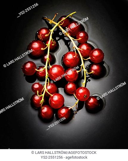 Closeup of red ripe redcurrant berries with dark background