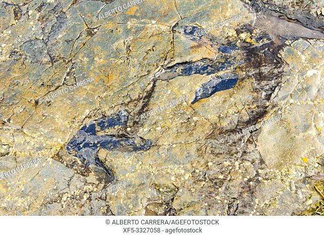 Ichnites Paleontological Deposit of Fuentesalvo, Villar del Río, Ichnites Route of Highlands of Soria, Soria, Castilla y León, Spain, Europe