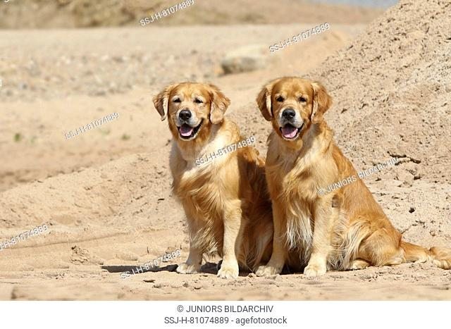 Golden Retriever. Father (8 years old, right) and son (3 years old, left) sitting next to each other on a beach. Germany