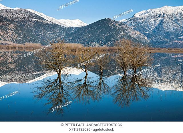 Reflections in the flooded plains of Mantineia, near Tripoli, Southern Arcadia, Peloponnese, Greece