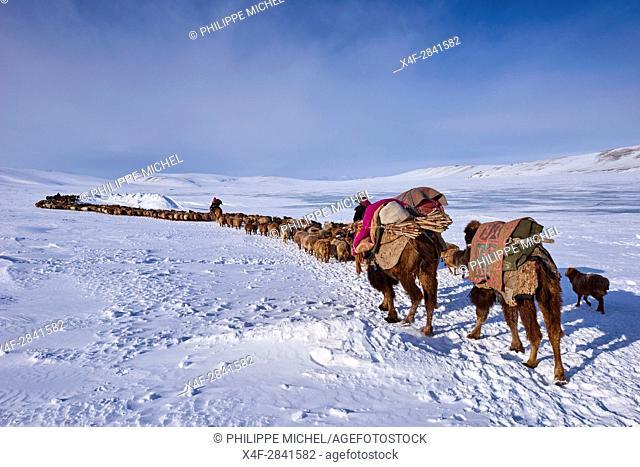 Mongolia, Bayan-Ulgii province, winter transhumance of the Kazakh nomads