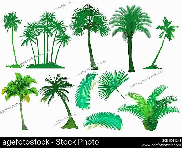 Palmen Bäume