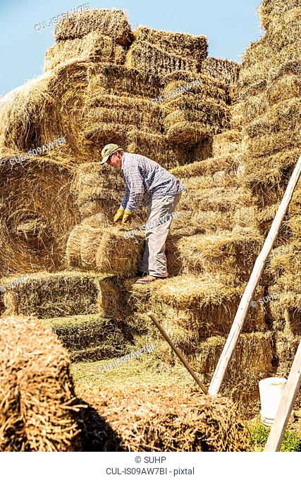 Side view of man on haystack stacking bales