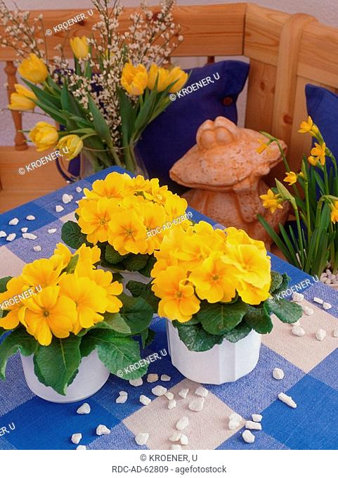 Spring flowers: Primroses Daffodils in pot and bouquet of Tulips
