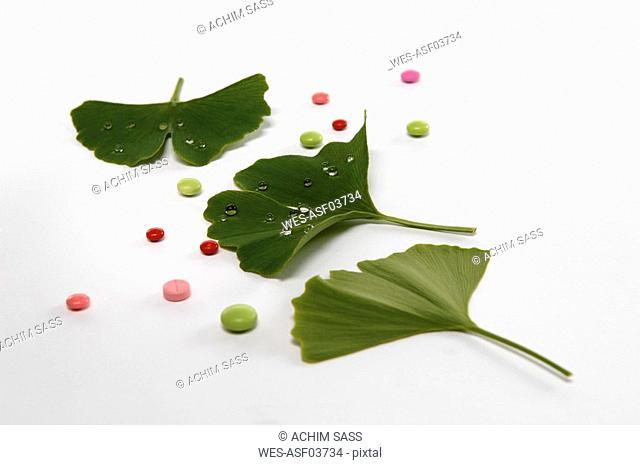 Gingko, Medicinal plant and pills, close up
