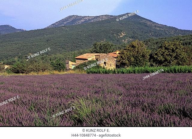 France, Europe, lavender, at Sainte Jalle, Les Baronnies, Department Drome, Provence, field, agriculture, mountains, h