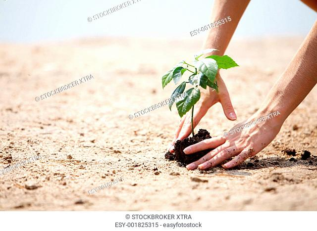 Close-up of human hands taking care of green branch with leaves in soil